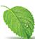 mini mint leaf.jpg