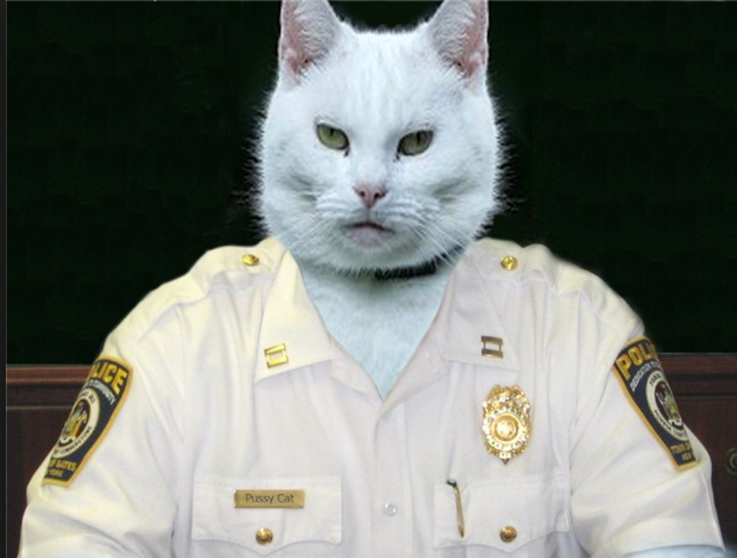 CHAIRMAN MEOW   Head of Security