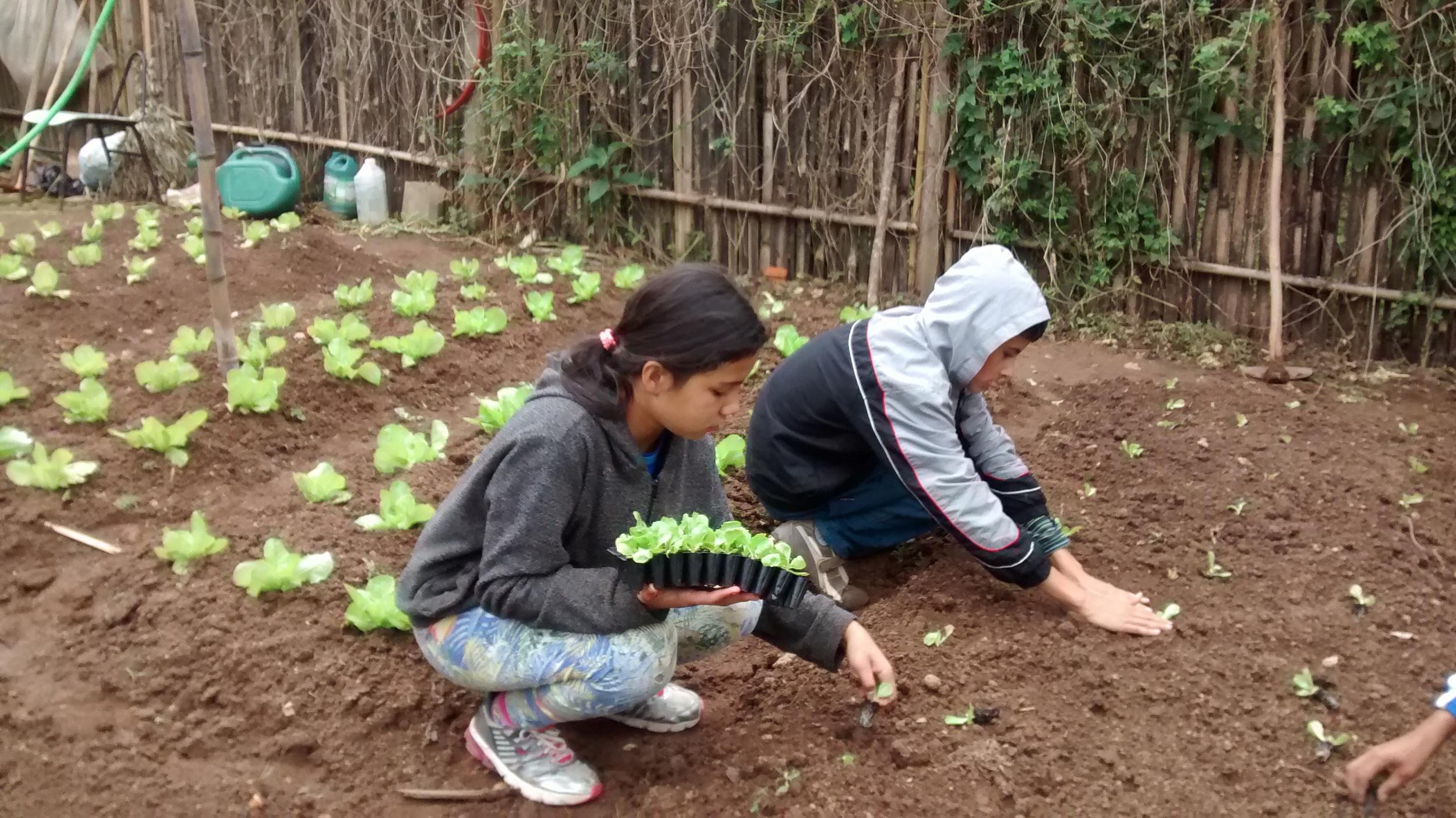mais educação - agroecologia - MAISA.jpg