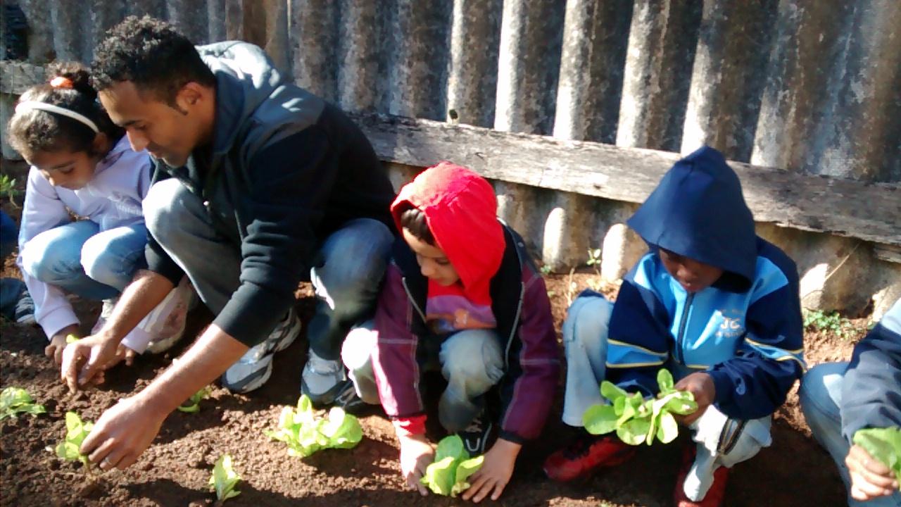 Plantando mudas de alface.jpg