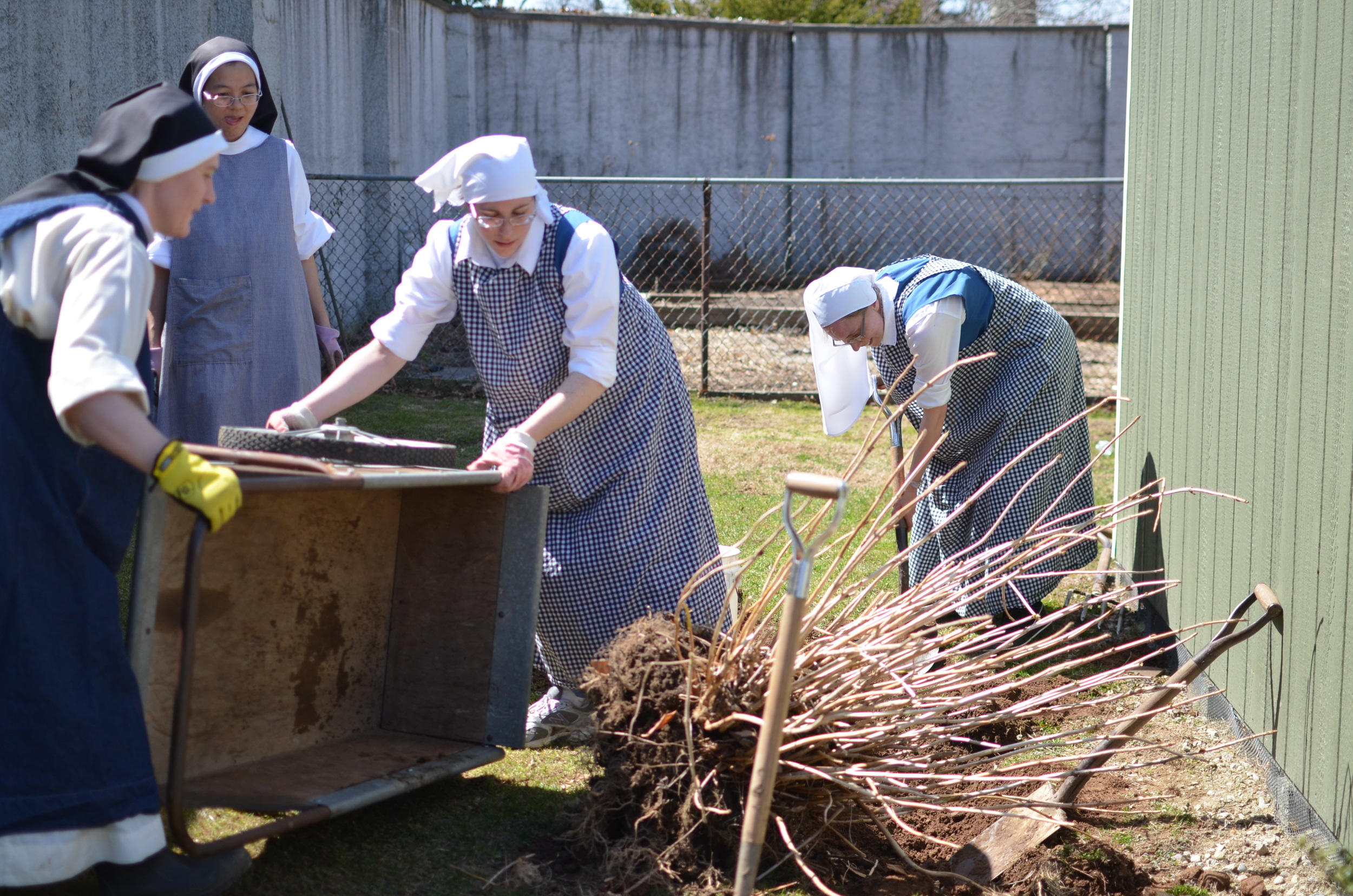 What took the (young) professed to do in an hour took the POSTULANTS about 15 minutes! They got the next 2 hydrangea out in no time and the sisters began transplanting them to the side of the hermitage!