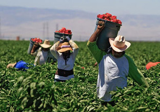 agricultural-workers-national-review-picture.jpg
