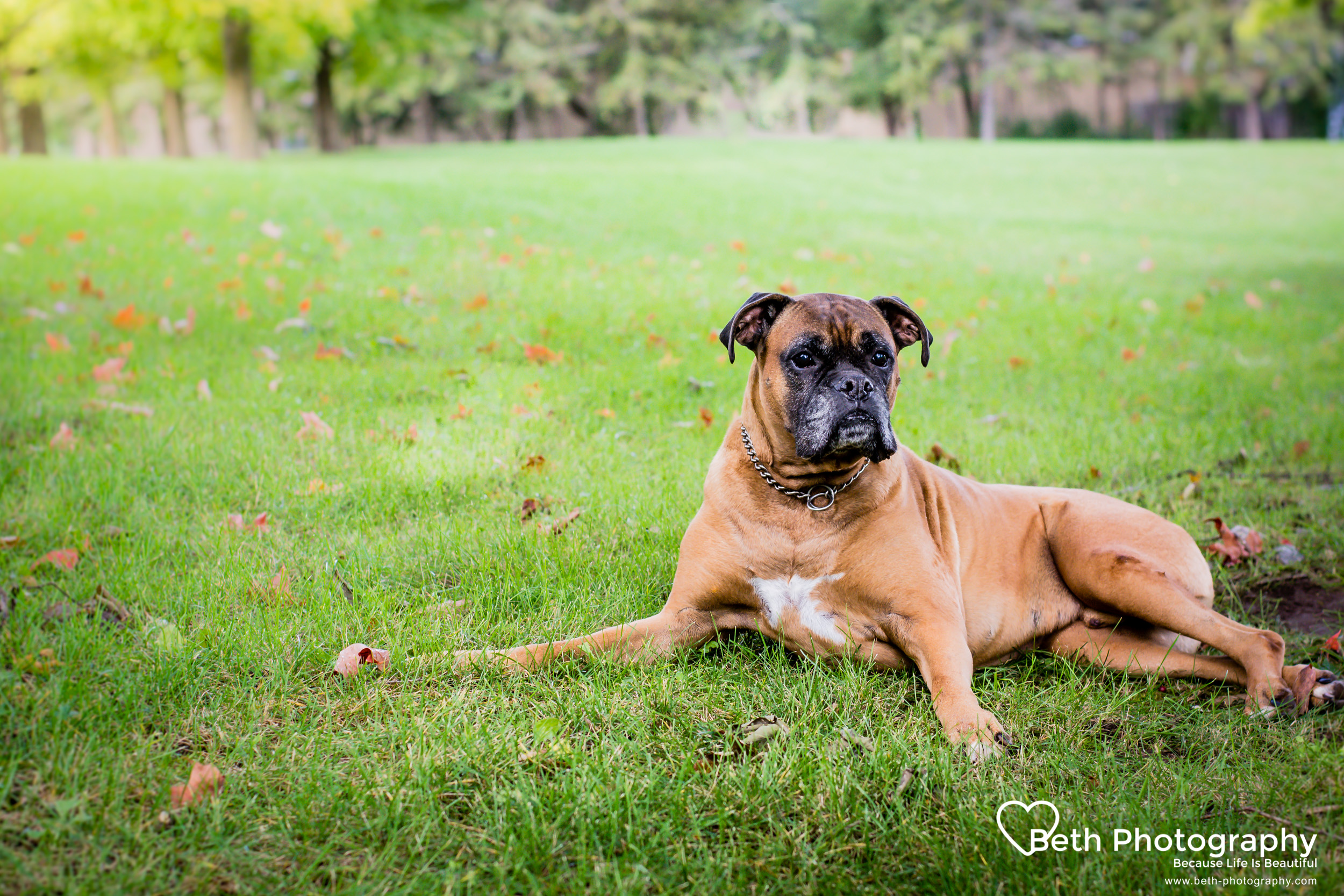 Beth Photography - Pet Photographer - Servicing the Ottawa, Cornwall area.