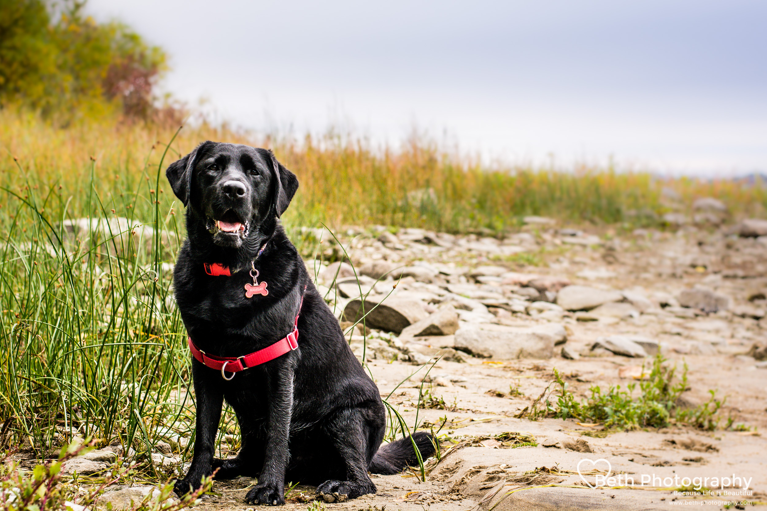 Beth Photography- Cornwall to Ottawa Pet Photographer-124.jpg