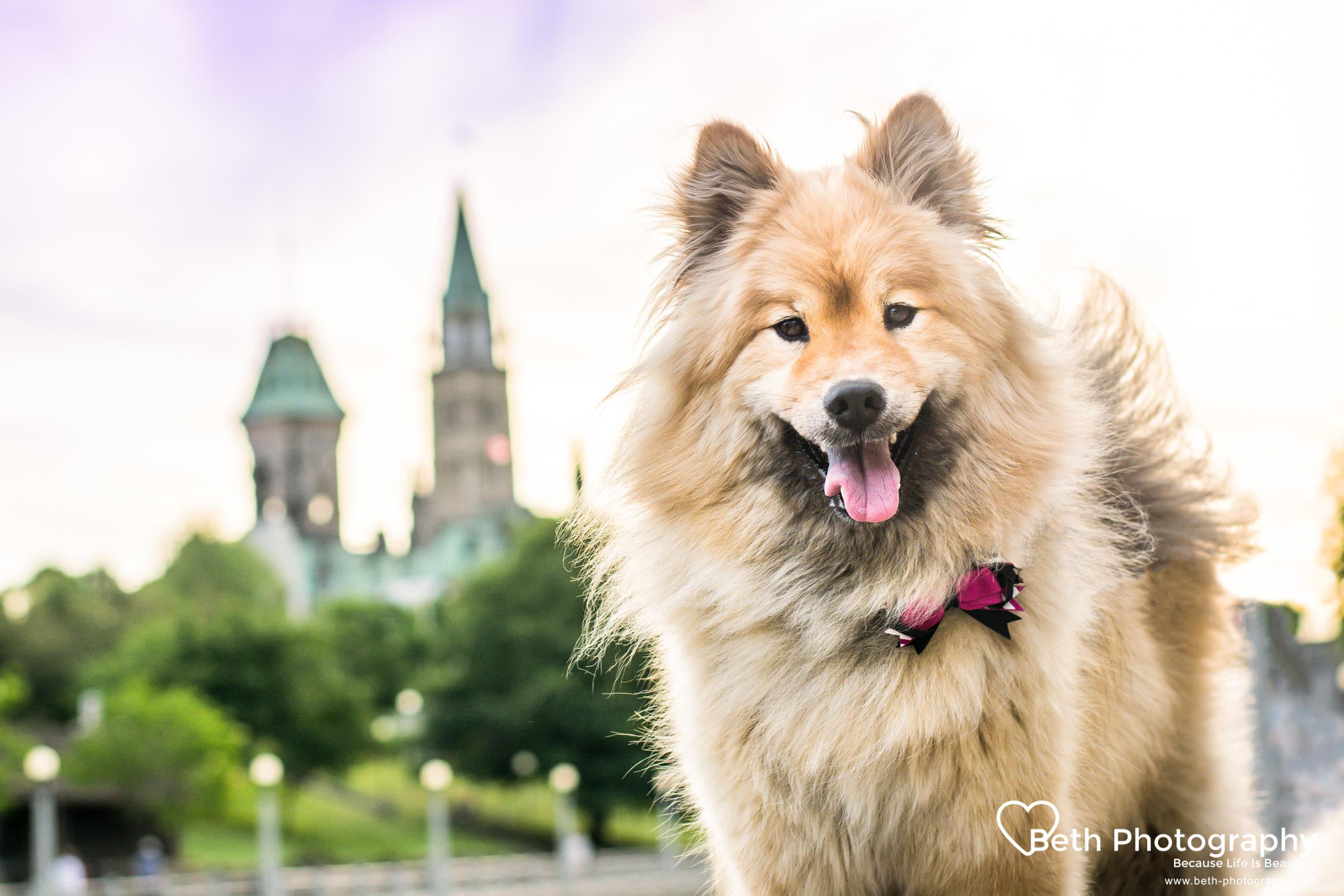 Beth Photography- Pet photographer - Ottawa to Cornwall.jpg