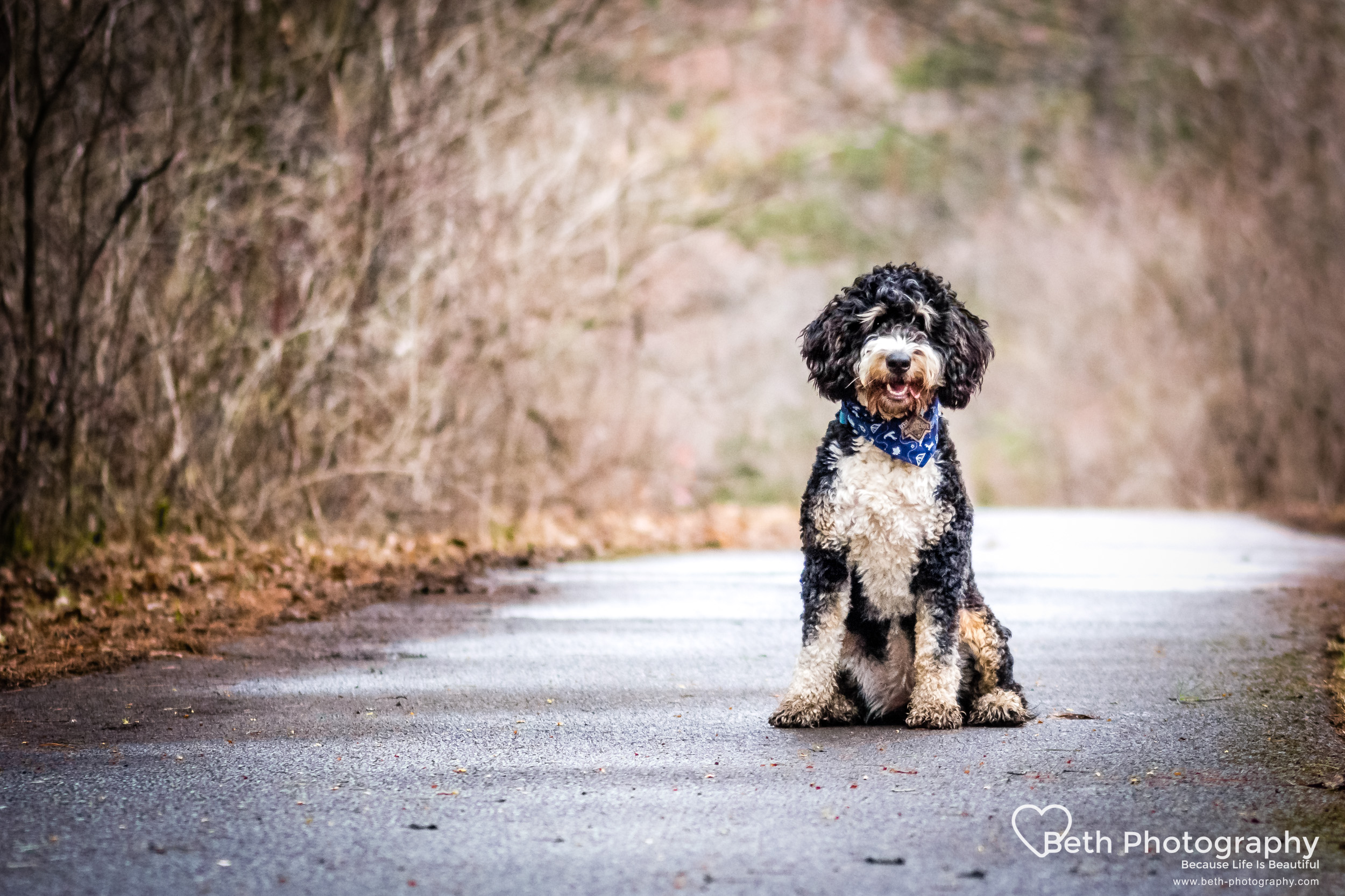 Beth Photography - Pet Photographer -Servicing Ottawa to Cornwall-25.jpg