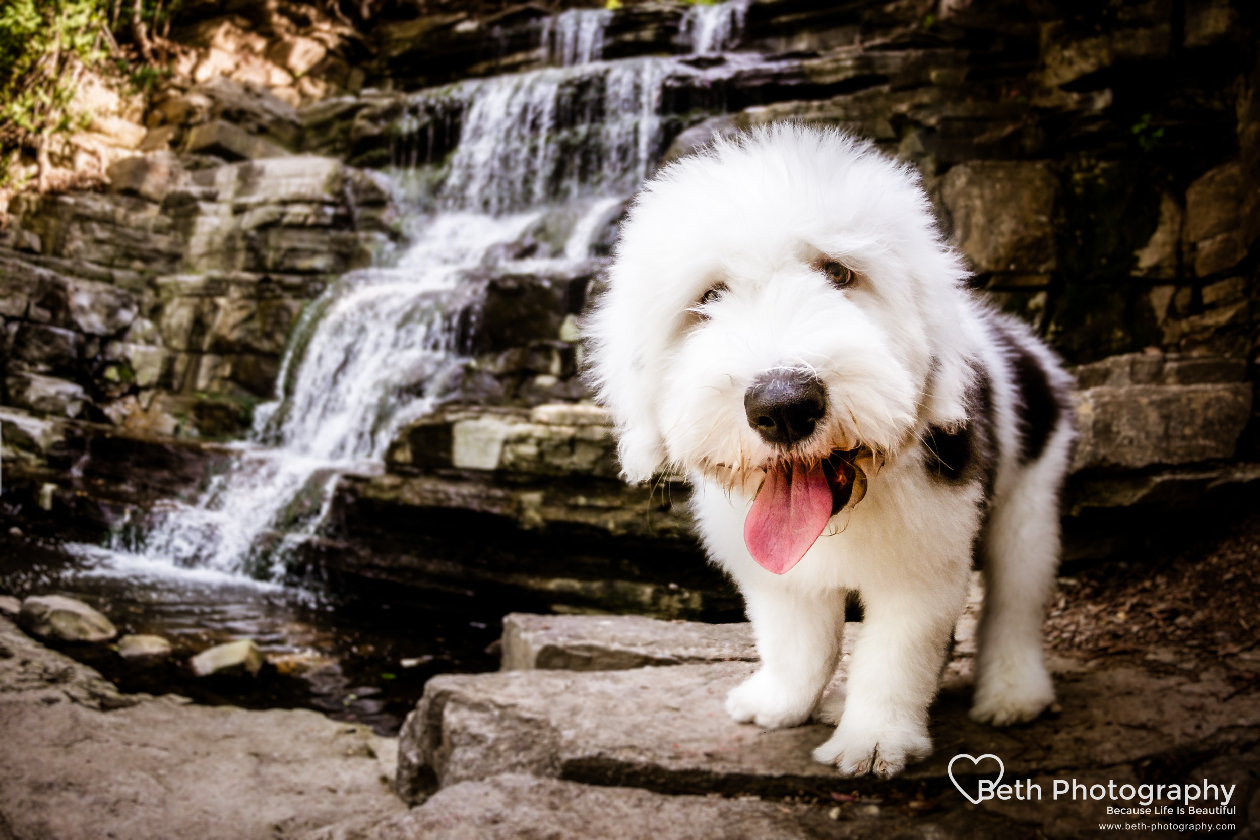 Beth Photography - Pet Photographer -Servicing Ottawa to Cornwall-71.jpg