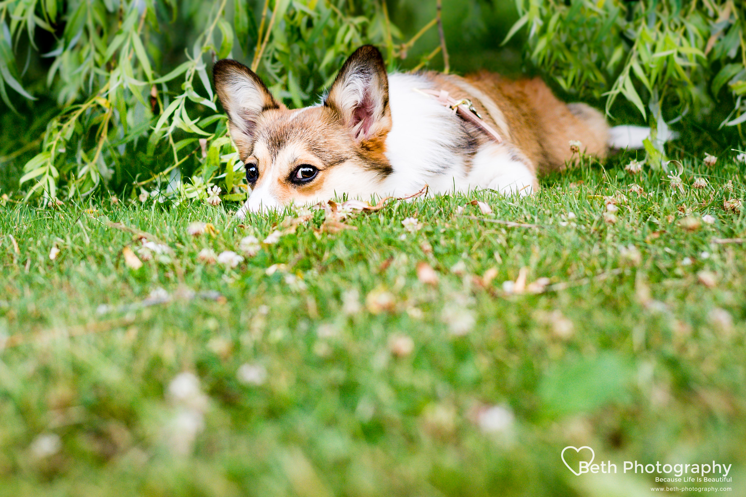 Beth Photography - Pet Photographer -Servicing Ottawa to Cornwall-21.jpg
