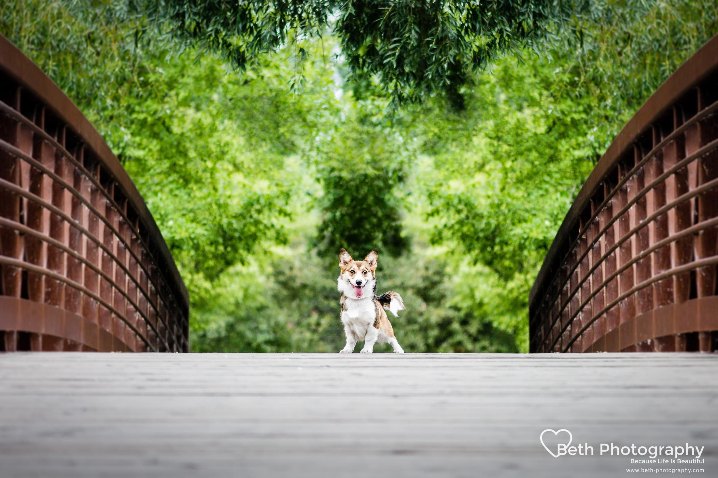 Beth Photography - Pet Photographer -Servicing Ottawa to Cornwall-34.jpg