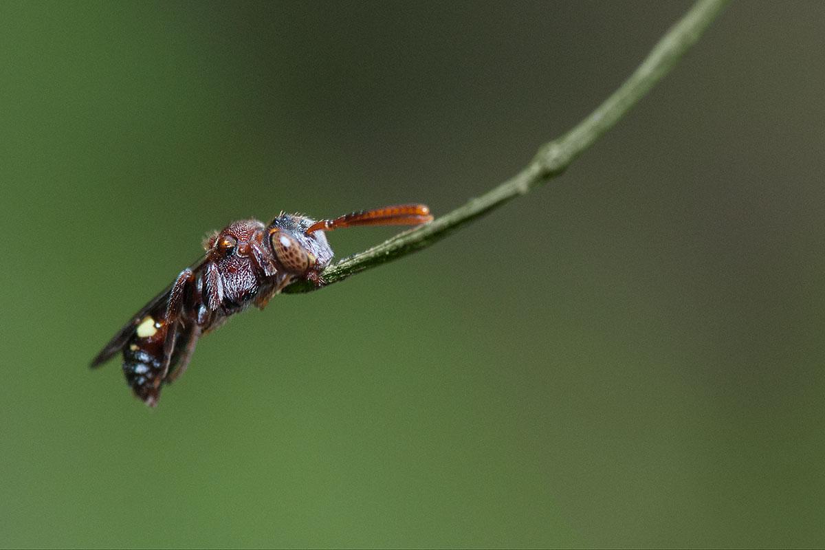 Unidentified bee (?)