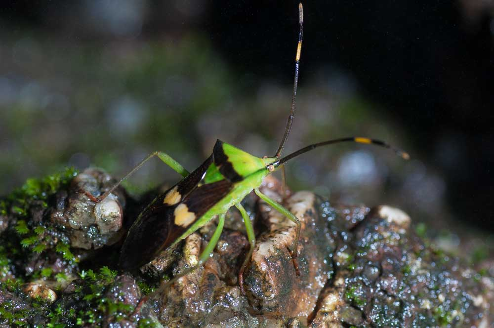 This shield bug seems to have a heart. Or two, even.