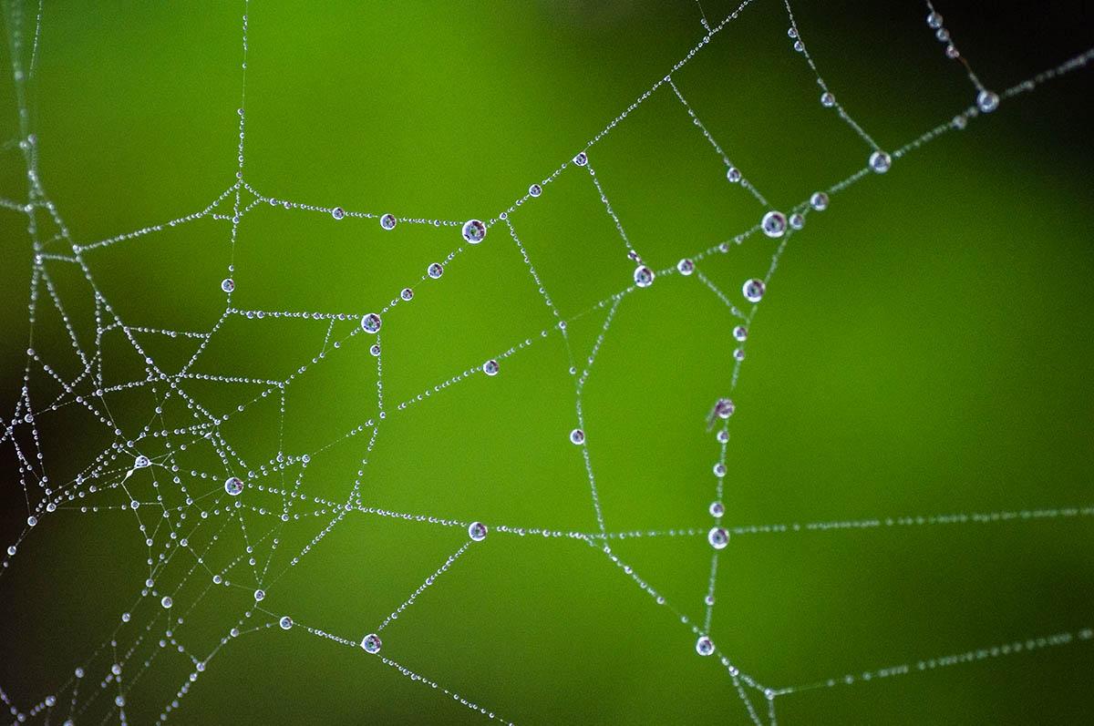 An uninhabited web.