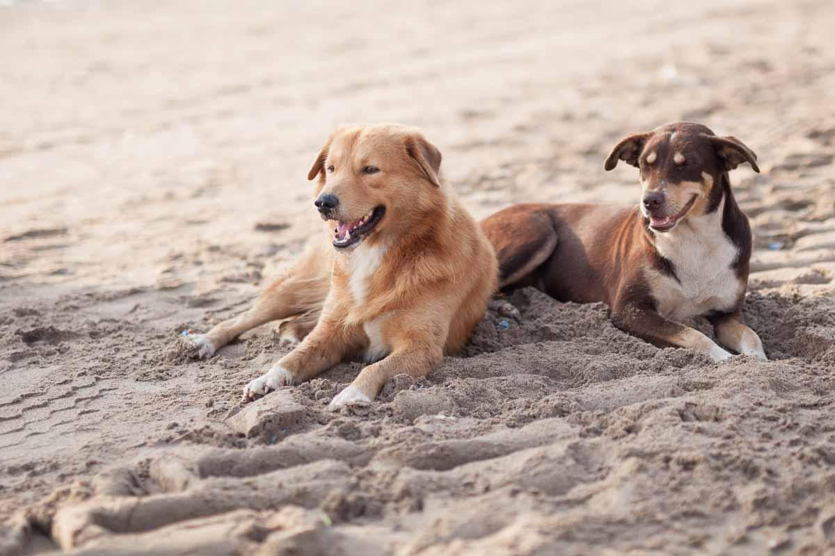 Beach buddies.