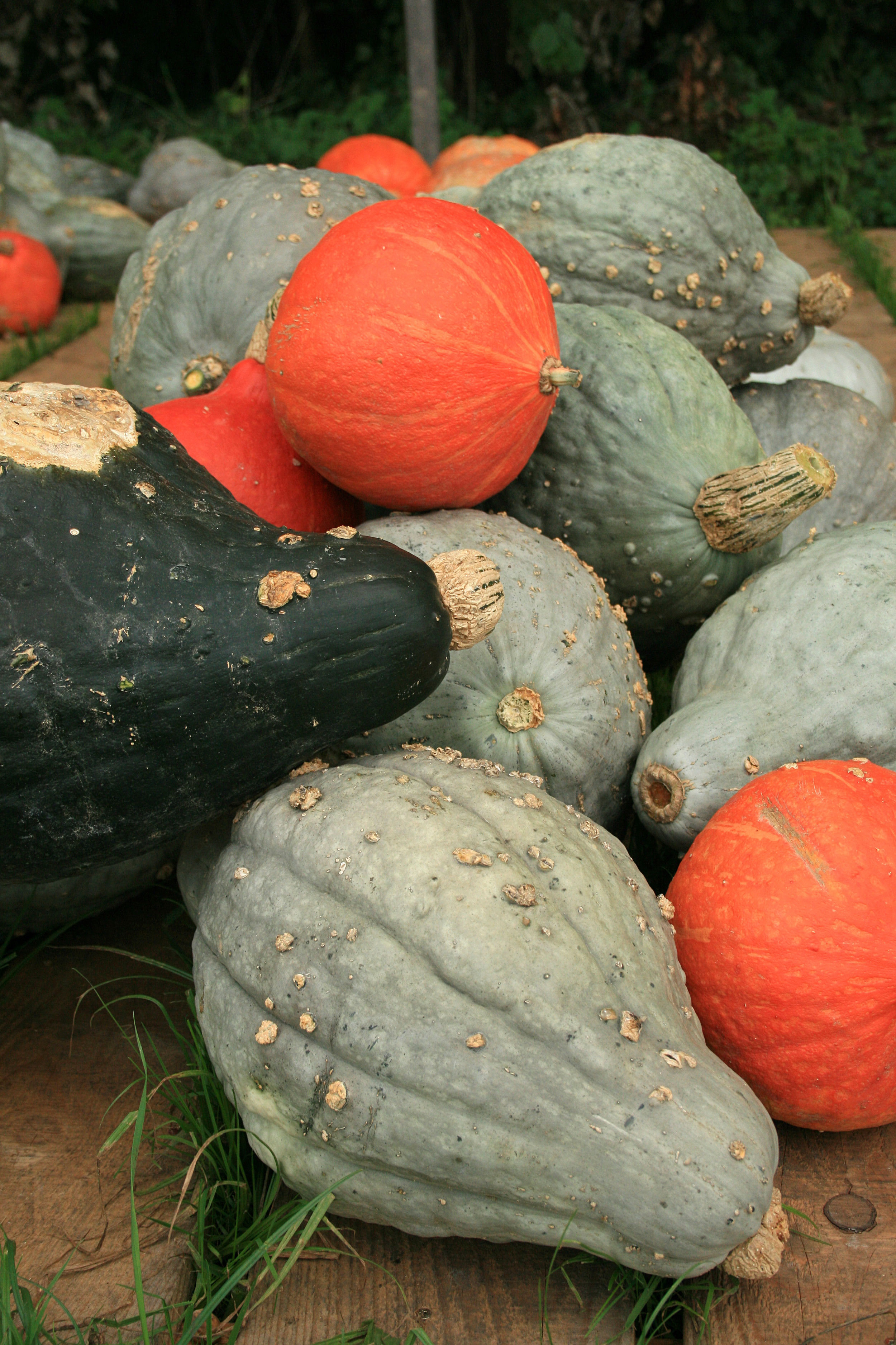 Please see recipes for hubbard squash below. Hubbard squash can be used in place of, and vice versa, sweet potato, pumpkin, and other squashes. Cut in half and place flesh-side down on a cookie sheet, baking in a 400 degree oven until tender.