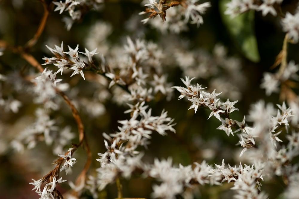 #10 Flowering shrub