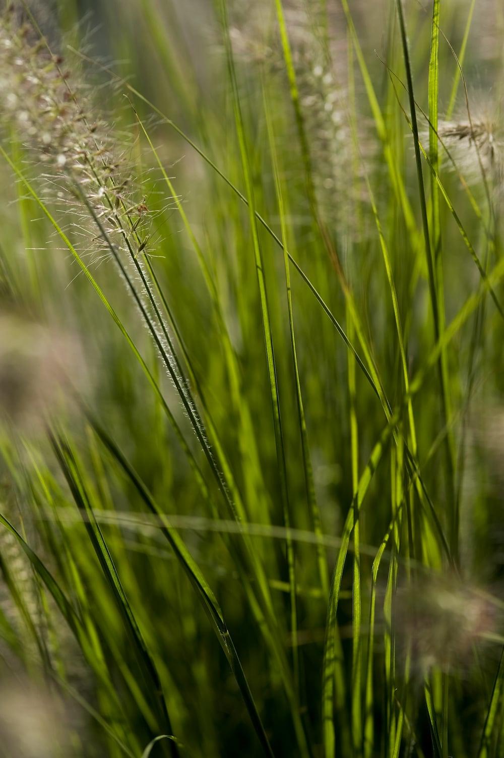 #12 Green grass