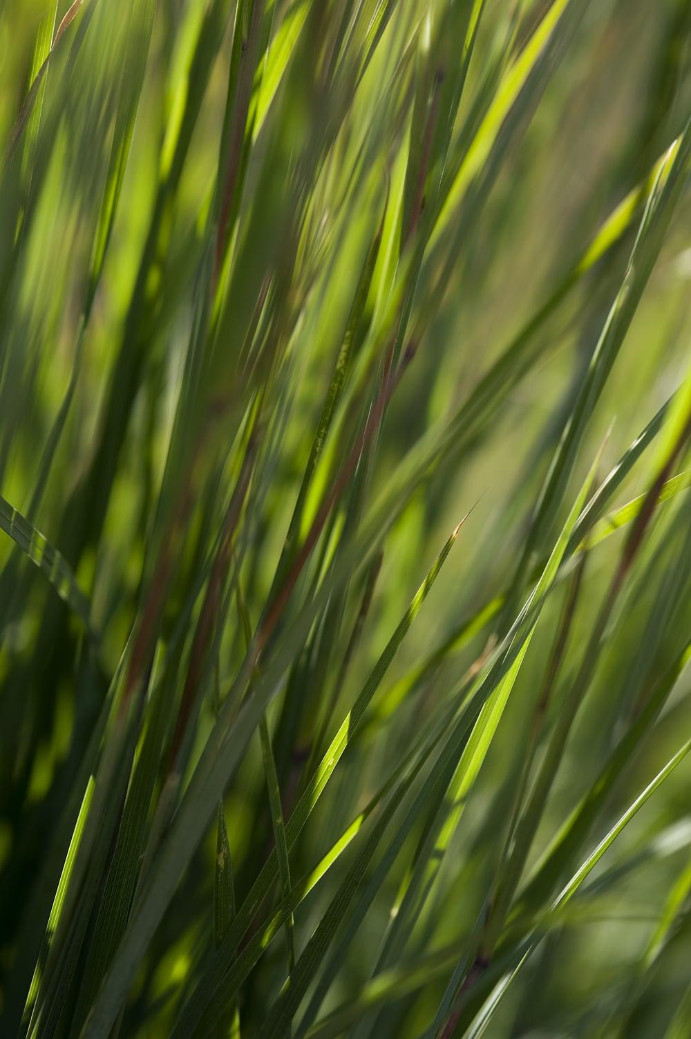 #18 Green/Red grass 1