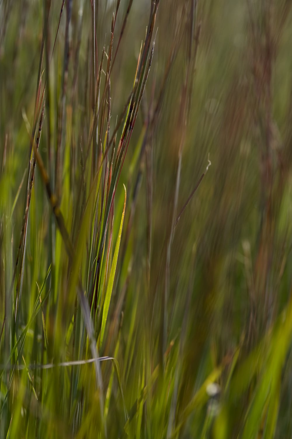 #19 Green/Red grass 2