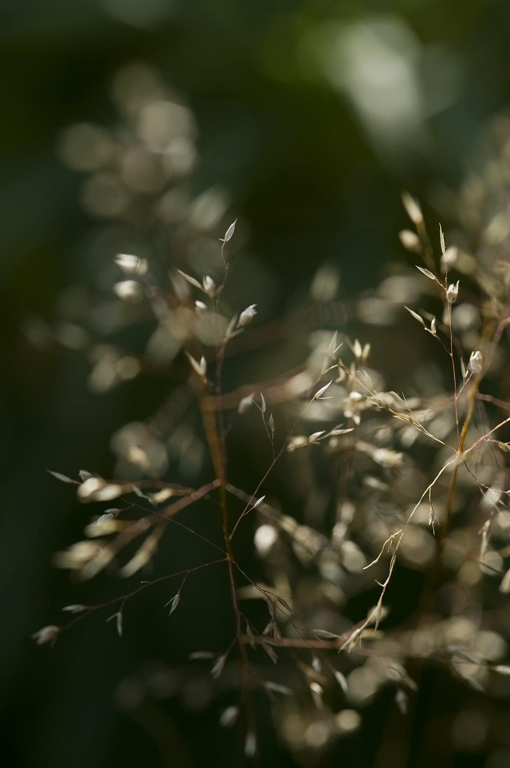 #20 Grass fronds