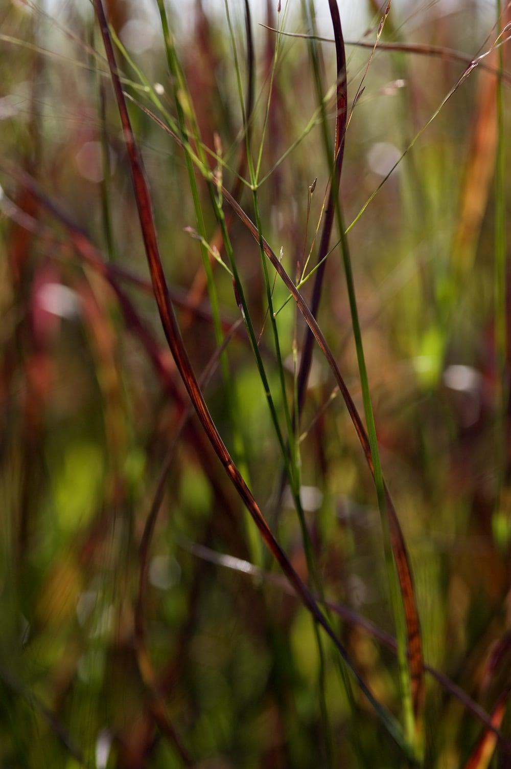 #34 Green/red grass 4