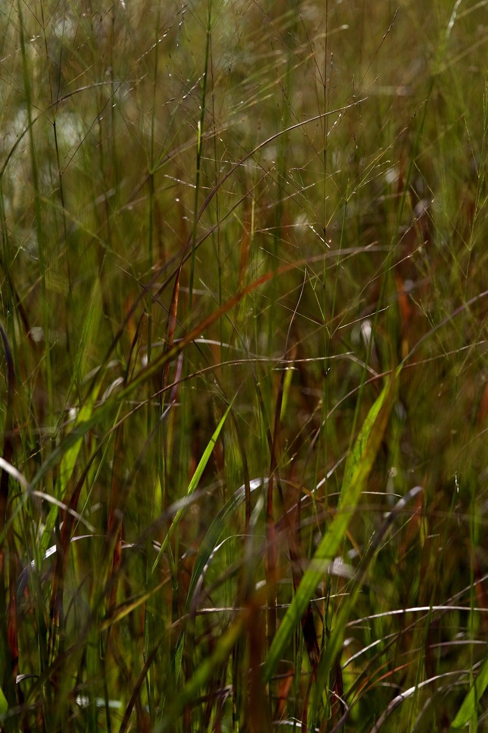 #35 Green/red grass 5