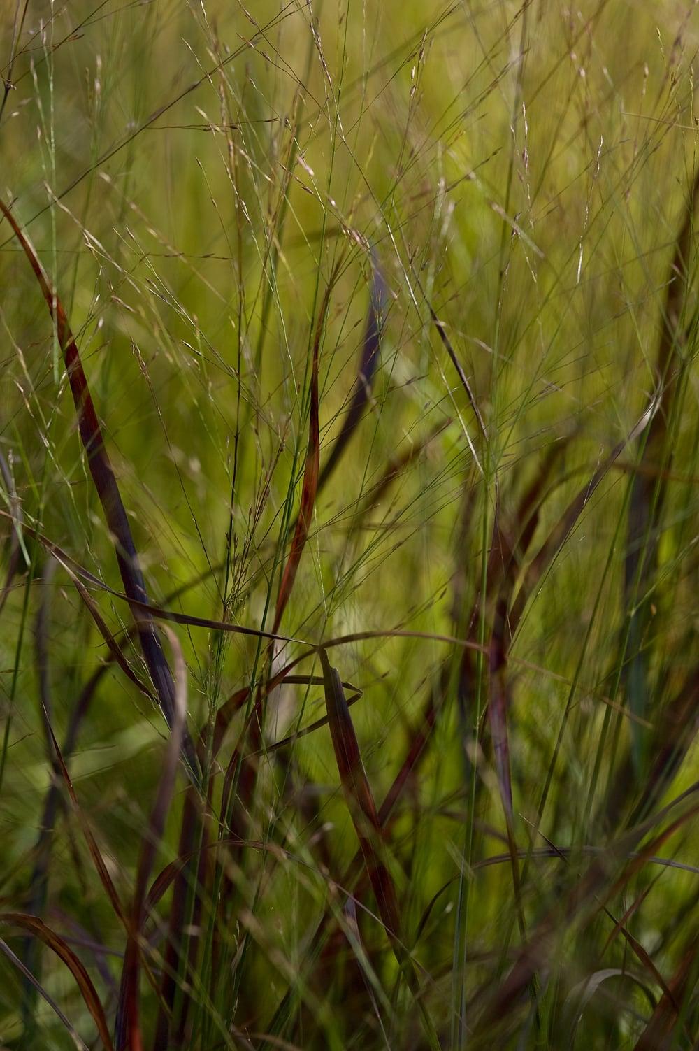 #36 Green/red grass 6