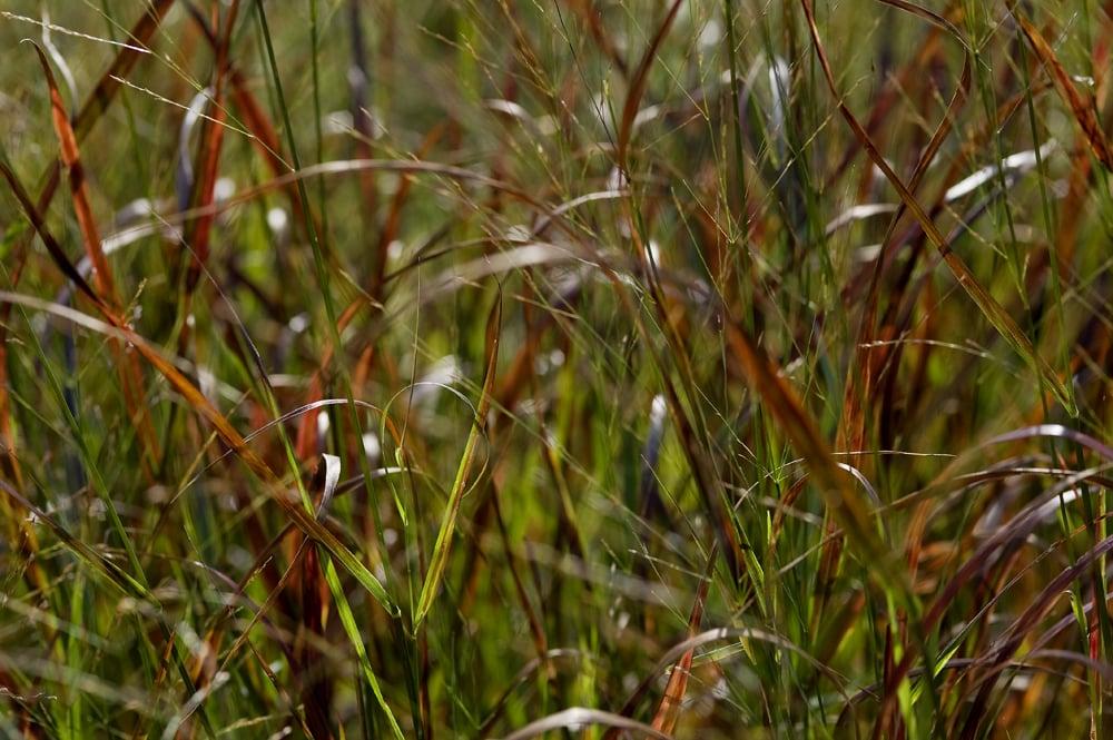#37 Green/red grass 7