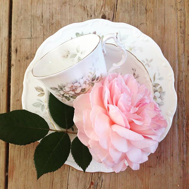 Fabulous floral David Austin Shropshire Lad blooms with our beautiful new (vintage) Royal Albert trios 😍 Happy Friday indeed!  #vintagechina #chinahire #pearlsandpeonies #weddinginspiration #vintagewedding #vintageteacup #teacup #trio #afternoontea #hightea #wedding #vintage #davidaustin