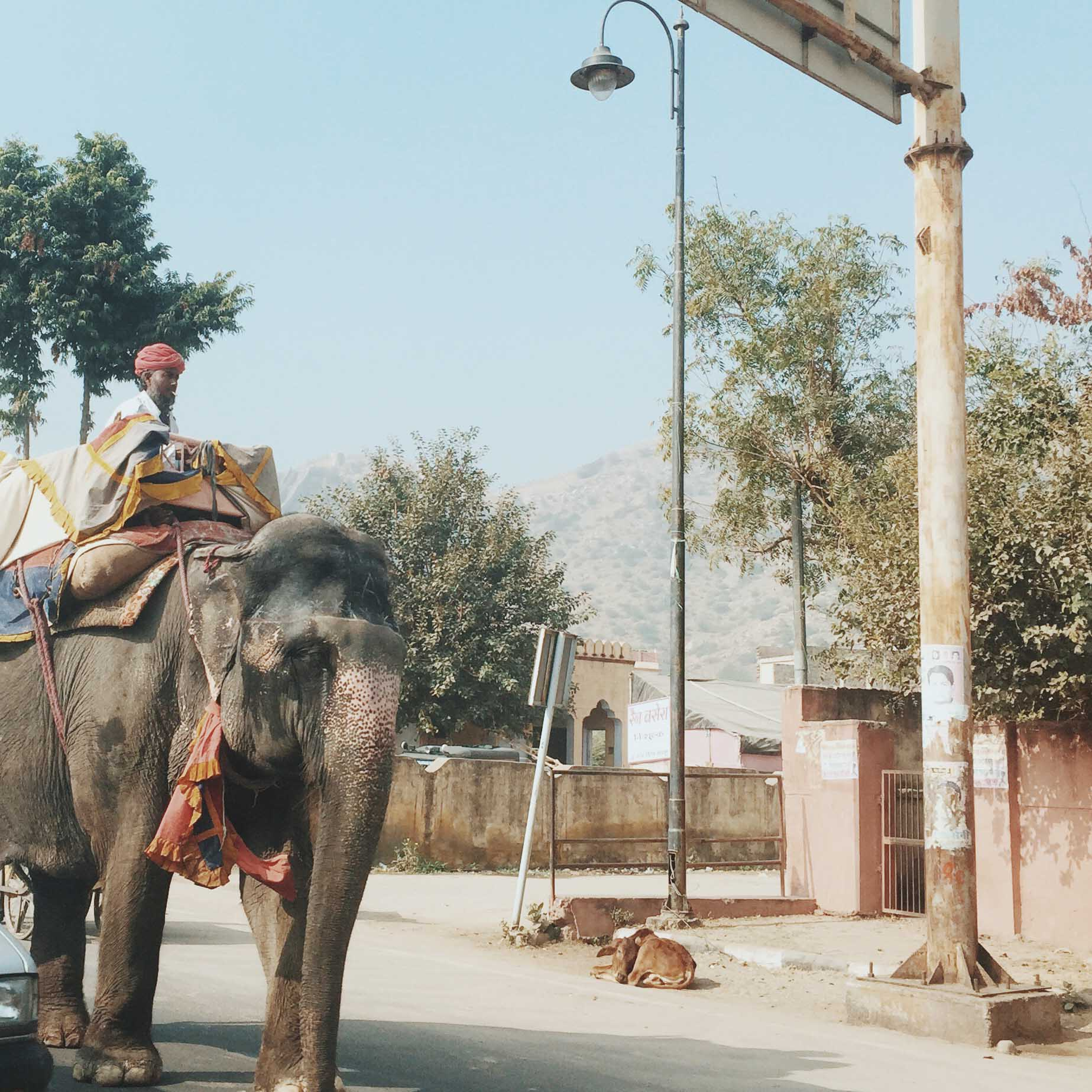 India-4147.jpg