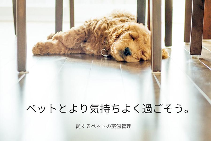 magazine-02.png