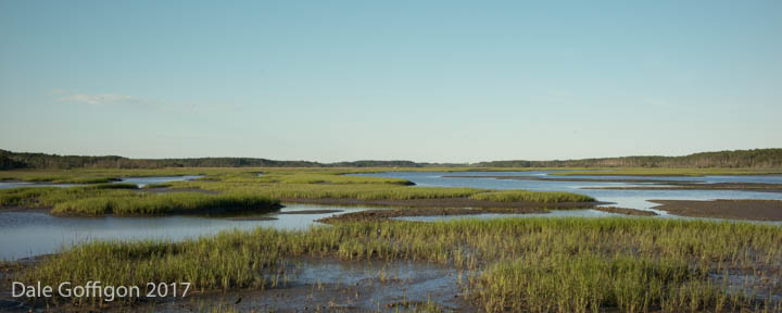 Quinby Marsh
