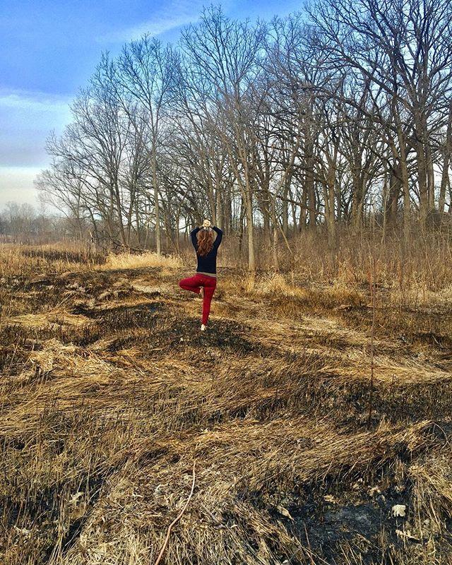 #fire #earth #wind #dupagecounty #trees #vrksasana #balance #spring #essenciayoga #yogaeverywhere #yogaeveryday