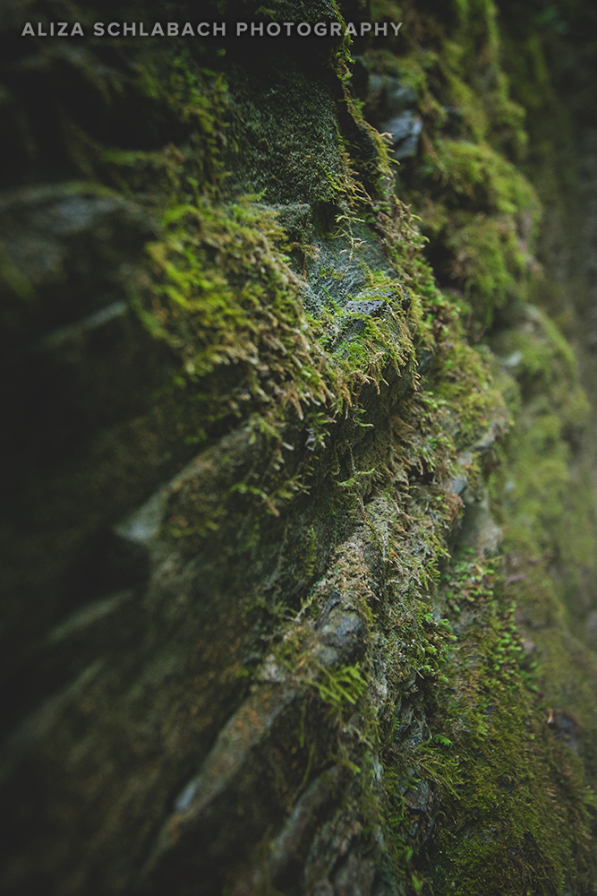 Moss at Watkins Glen
