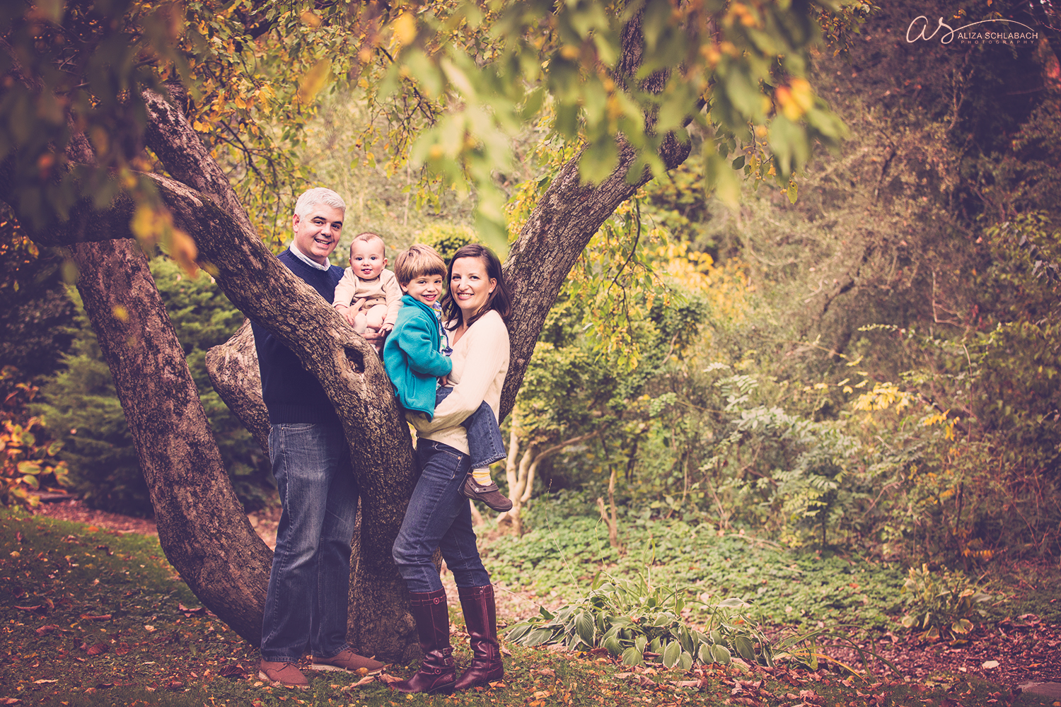 Fall family picture in a tree at The Grange Estate in Havertown