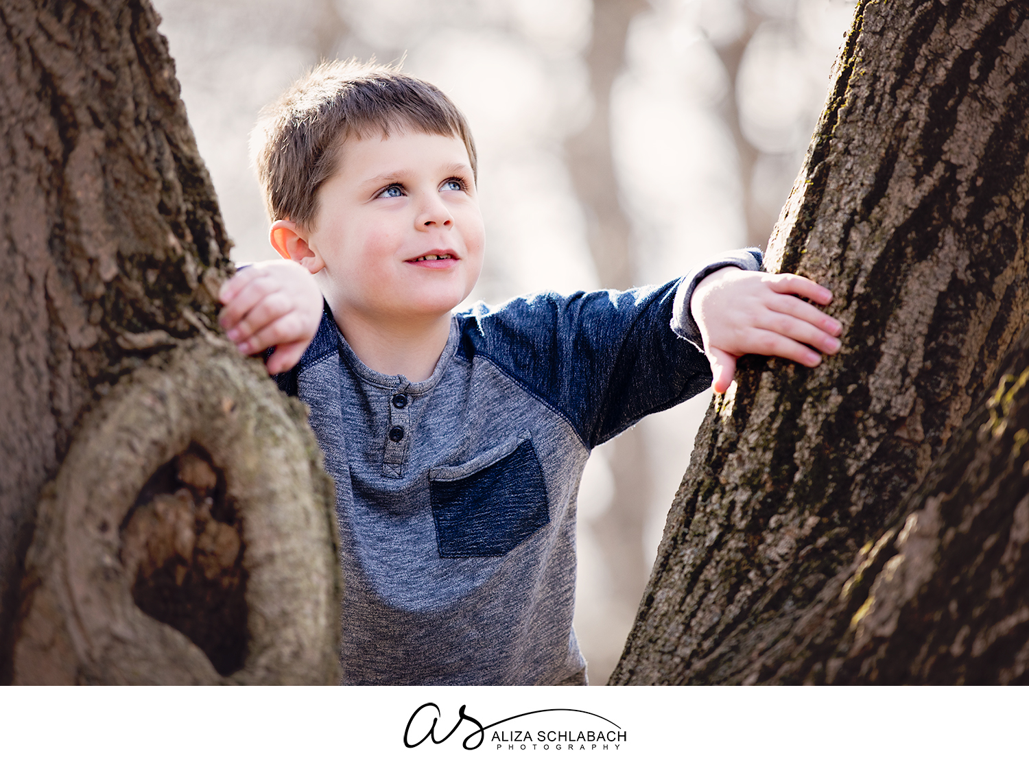 Photo of a little boy looking between some tree trunks