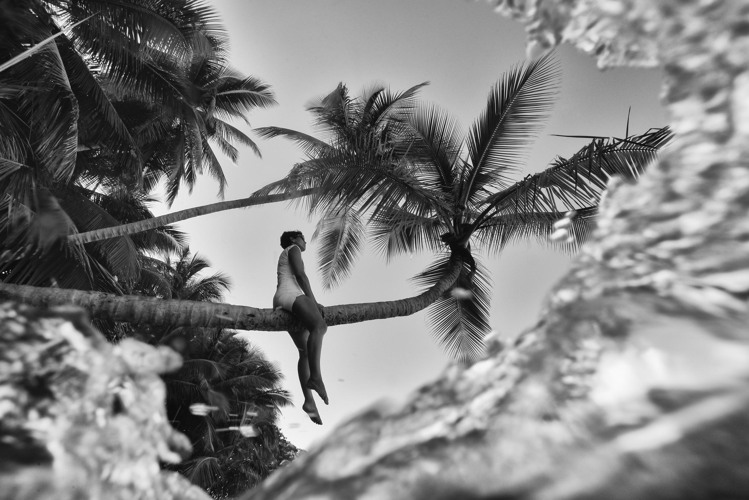 Coconut Trees #1.jpg