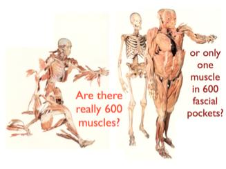 Source: Anatomy Train