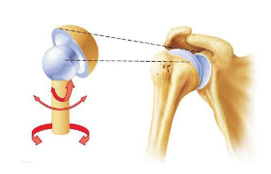 Ball and socket joint. Photo: pivotalphysio.com