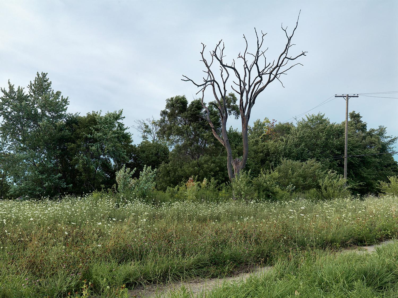 Corner-of-Lambert-and-Field,-Eastside,-Detroit-2015_6589526.jpg