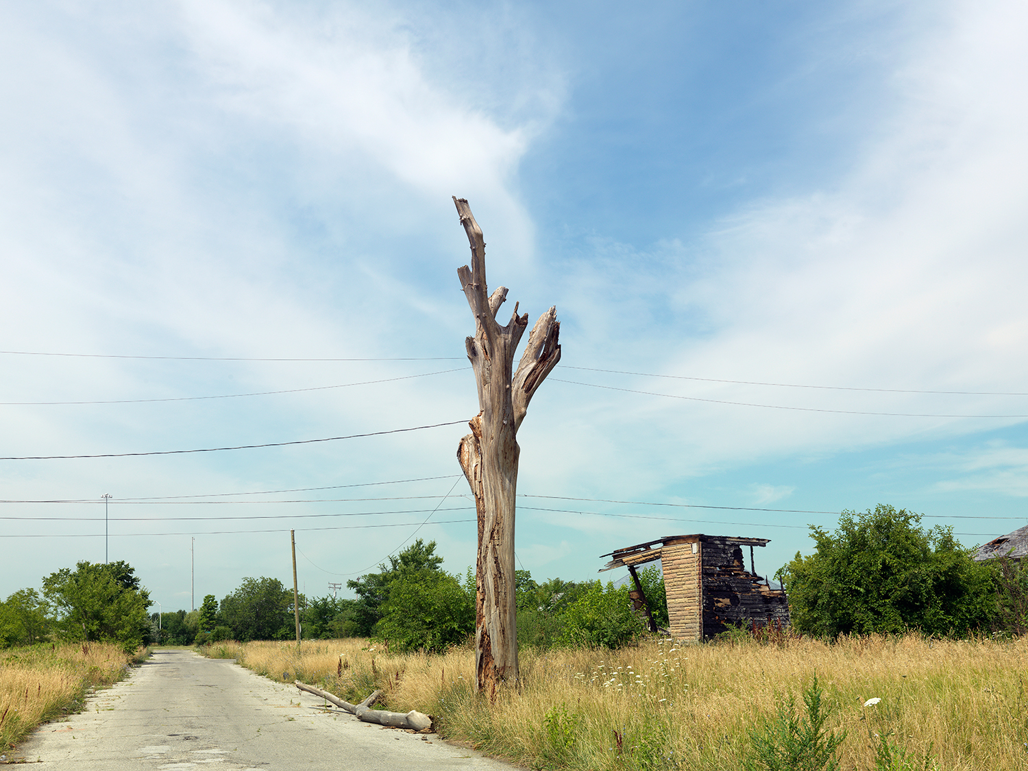Tree-Stump-5b,-Detroit-2012.jpg