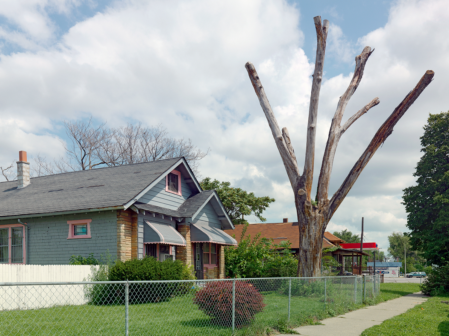 Tree-Stump-21,-Detroit-2011.jpg