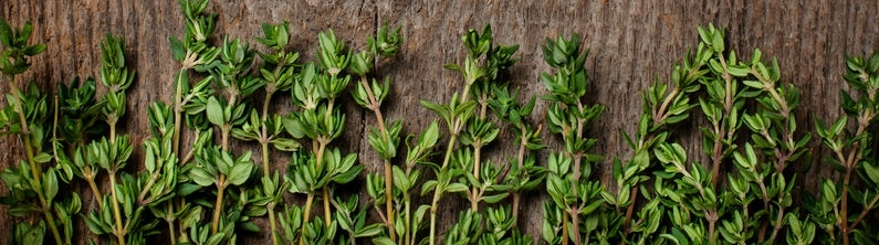 Thyme represents the freshness of nature