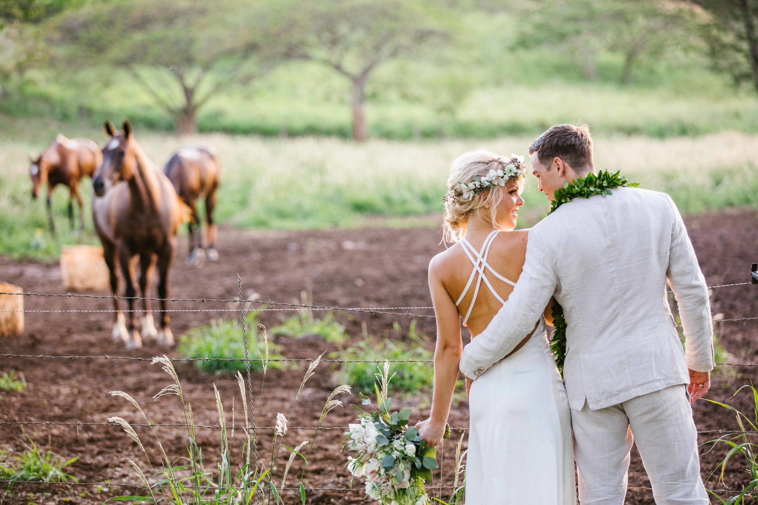 Horses Meet Wedding Couple
