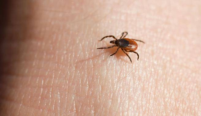 Click here to learn about diseases that ticks can transmit to you and your furry friend.