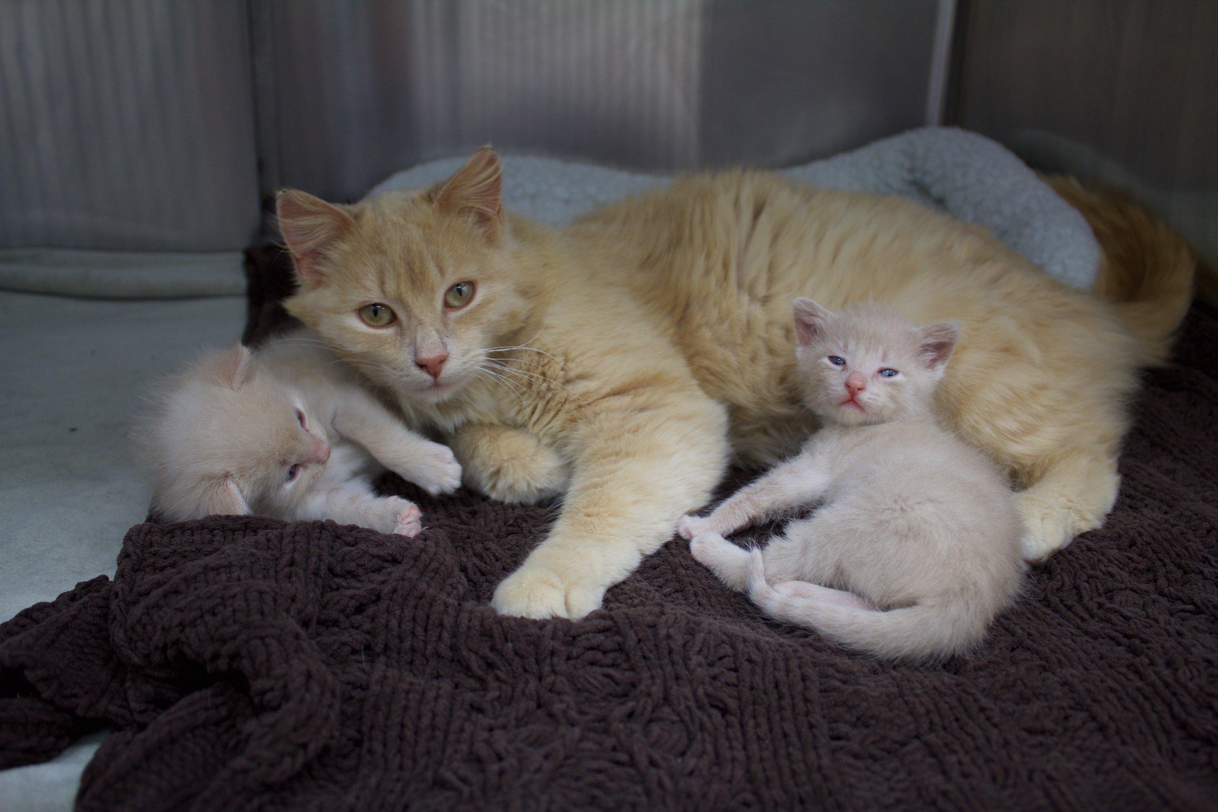 Mama Cat & Her 2 Kittens