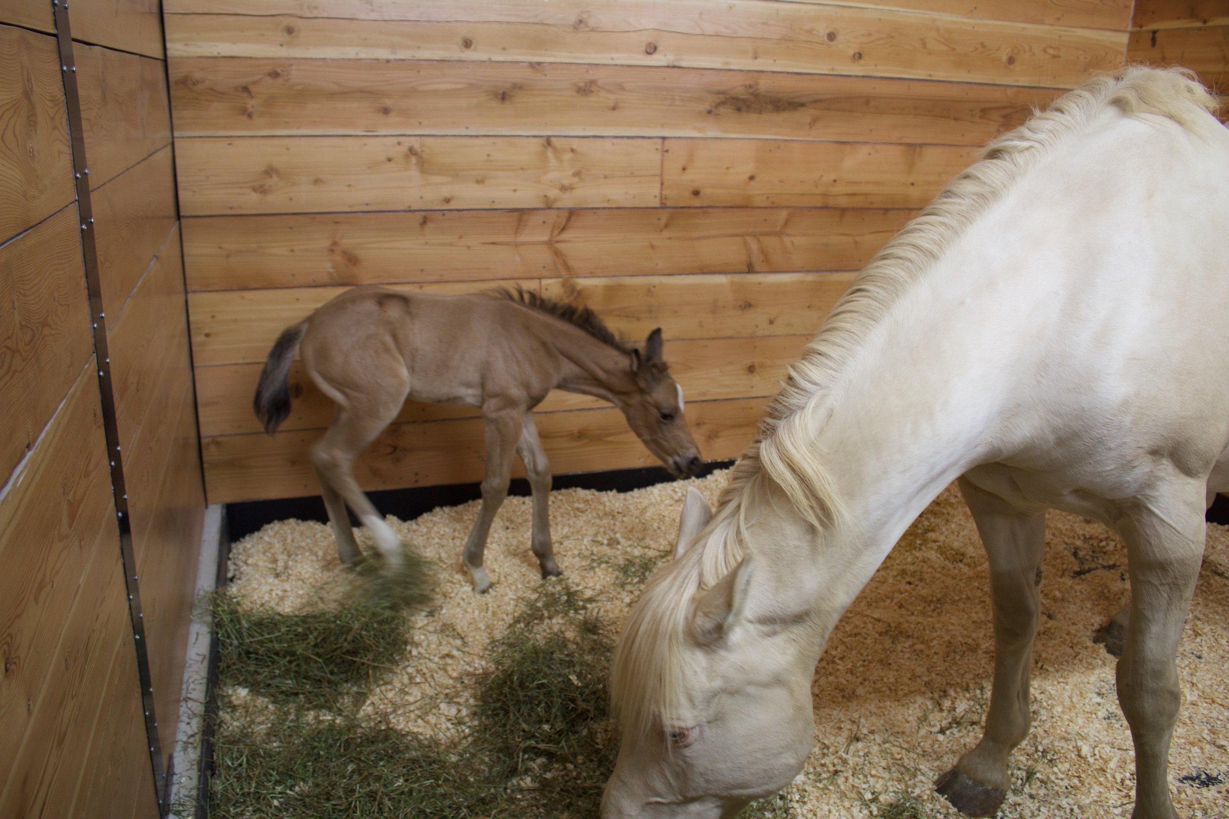 Mama & Her Foal