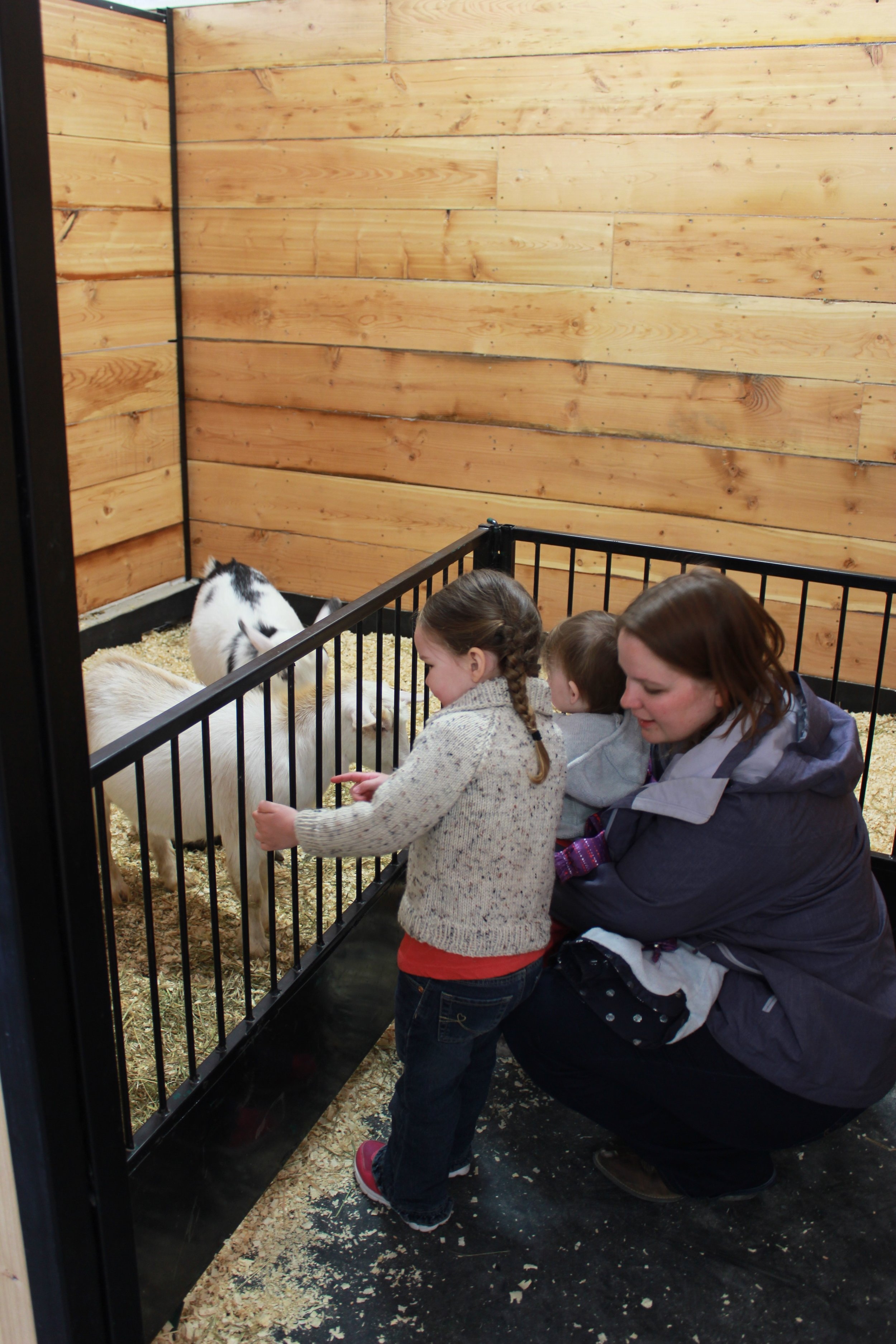 Visiting the Goats in our Petting Zoo
