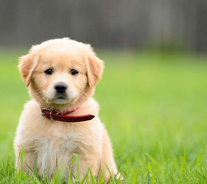 Puppy-Size-Love.jpg