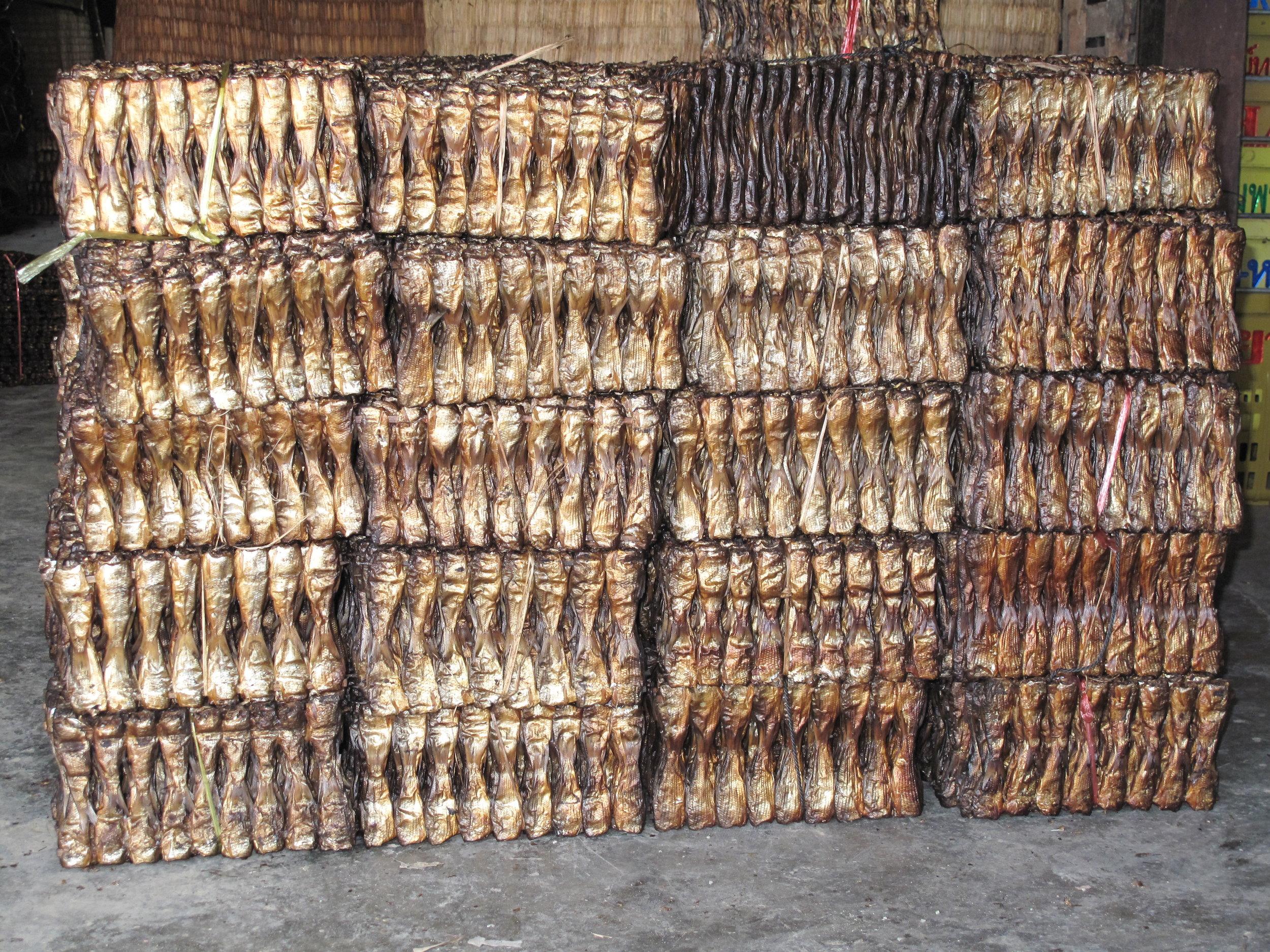 Dried fish at the fish paste factory, Battambang