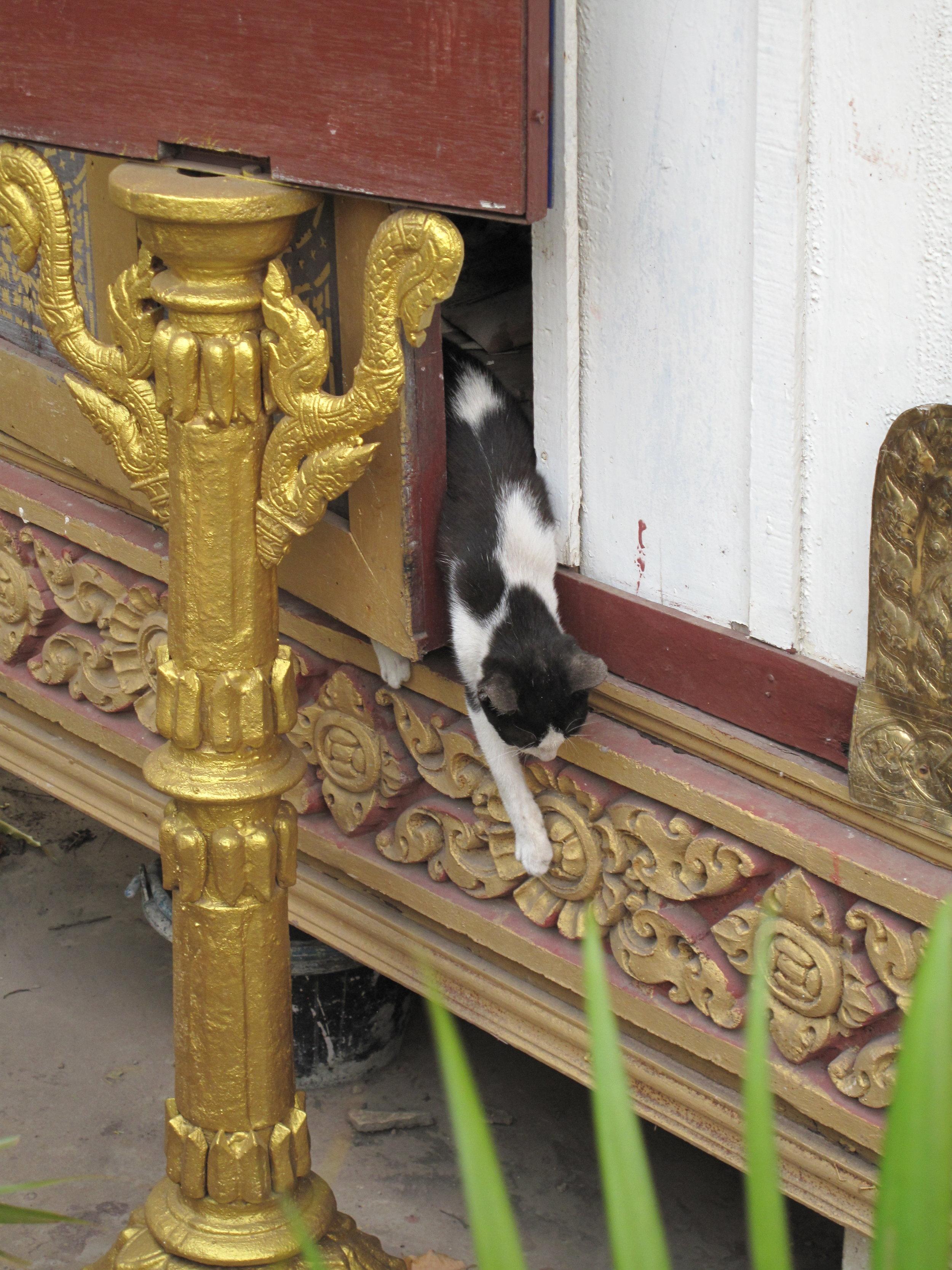 Cute stray kitty cat, Grand Palace, Phnom Penh
